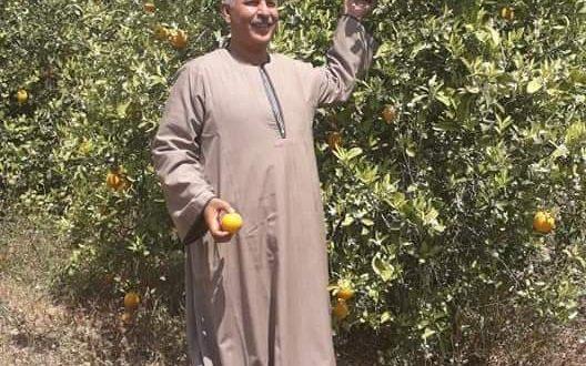 """الفلاحين"""" :مصر تتربع علي عرش تصدير البرتقال والبرتقال المر يريح القلب."""