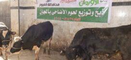 أورمان المنوفية تبدأ في ذبح ٤٠ رأس من الأضاحي تحت إشراف الطب البيطري اول ايام العيد.