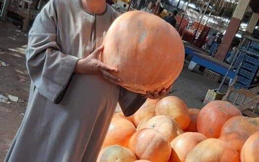 نقيب عام الفلاحين : جميع المنتجات الزراعيه المصريه  تشهد انخفاضا كبيرا في الاسعار
